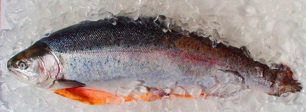 Купить рыбу в карелии оптом цена